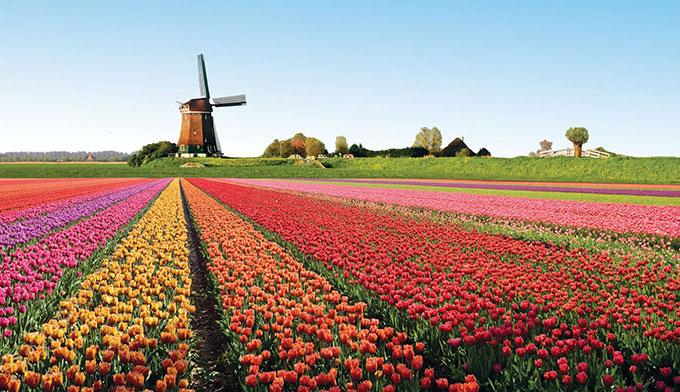 champ-de-tulipes-hollande