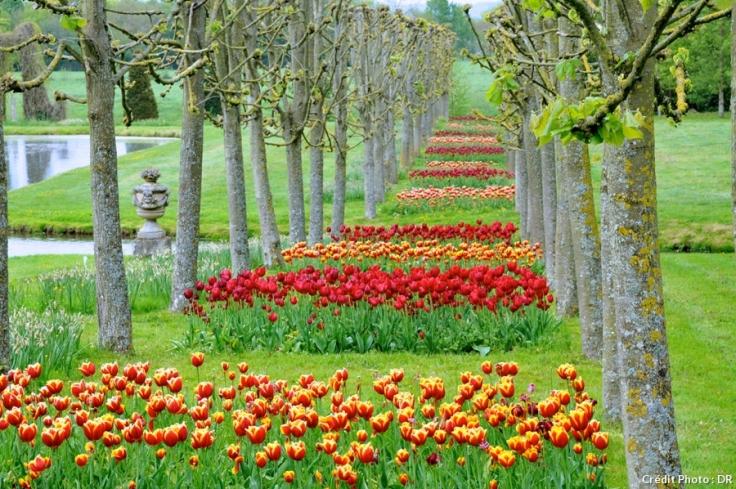 dj_tulipe_vendeuvre2