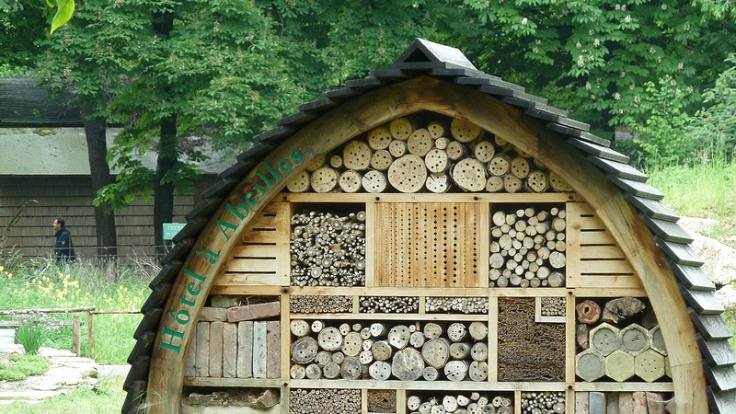 L h tel insectes le petit jardinier for Hotel a insecte coccinelle