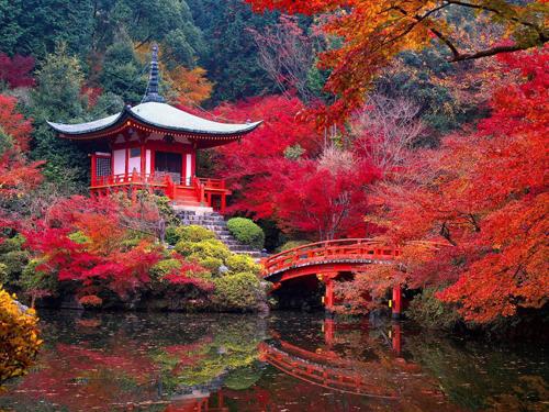 Jardin_Japon_Saiho-Ji-Kyoto-automne
