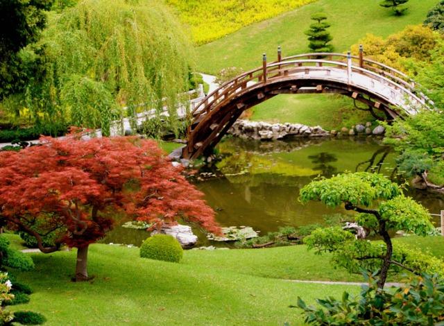niwaki-jardin-japonais-erable