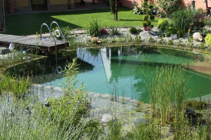 piscine-naturelle-bionova-retour-baignade5