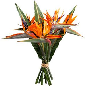 Bouquet_de_fleurs_Oiseaux_de_Paradis_tananarive