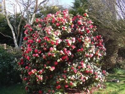 jardin-passion-si-faisiez-visiter-jardin_106916