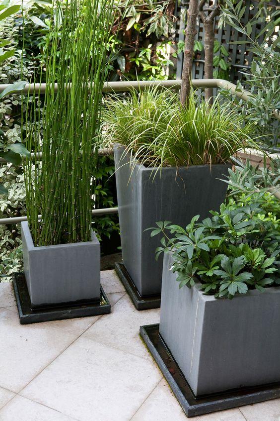 pr le aquatique du japon equisetum le petit jardinier. Black Bedroom Furniture Sets. Home Design Ideas