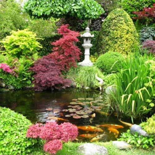 Jardin zen ou jardin japonais le petit jardinier - Quelles plantes pour jardin zen ...