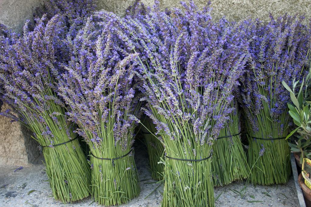 fleur-lavande-full-11907458
