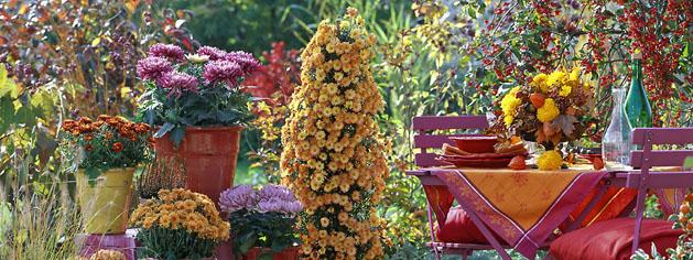 Terrasse en automne : Chrysanthemum (chrysanthËme), graminÈe, potÈe, meuble de jardin, ÈtagËre
