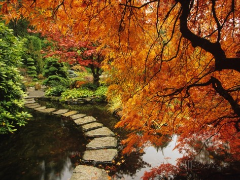barrett-mackay-couleurs-d-automne-dans-les-jardins-butchart-victoria-ile-de-vancouver-canada