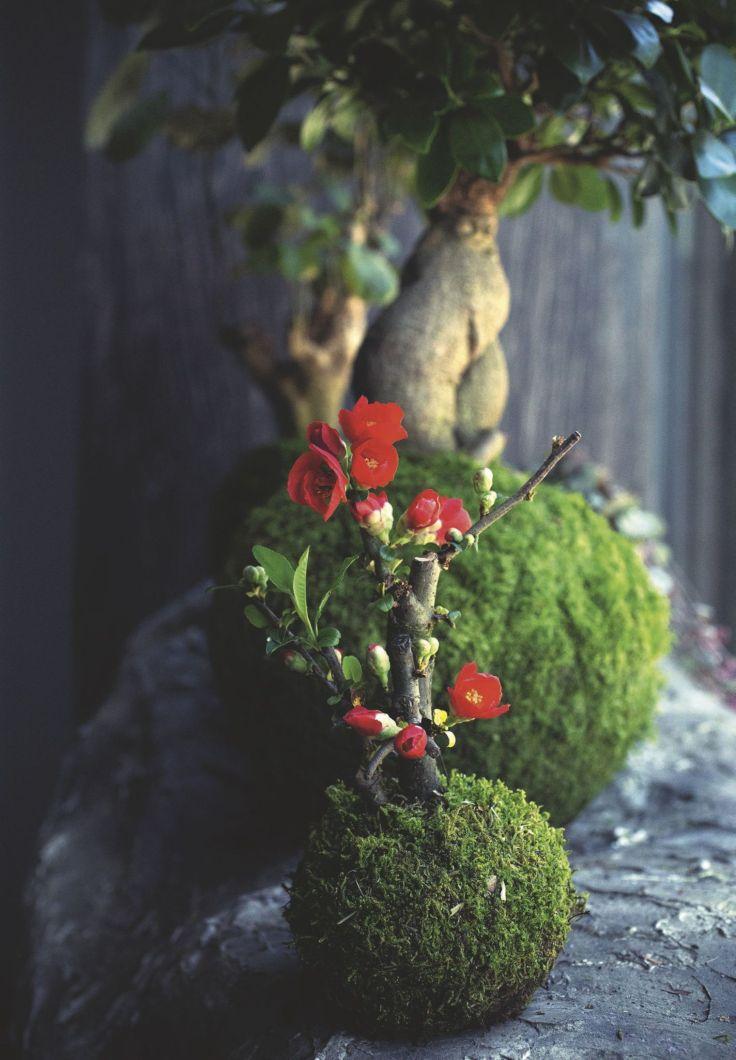 fleurs-en-kokedama-par-le-paysagiste-adrien-benard_5348189