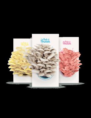 pack-pleurotes