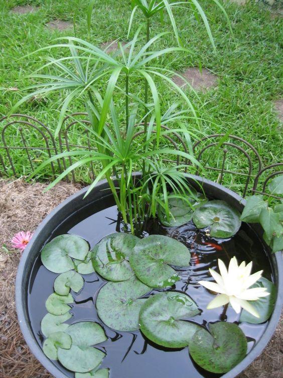 Mini bassin | Le petit jardinier