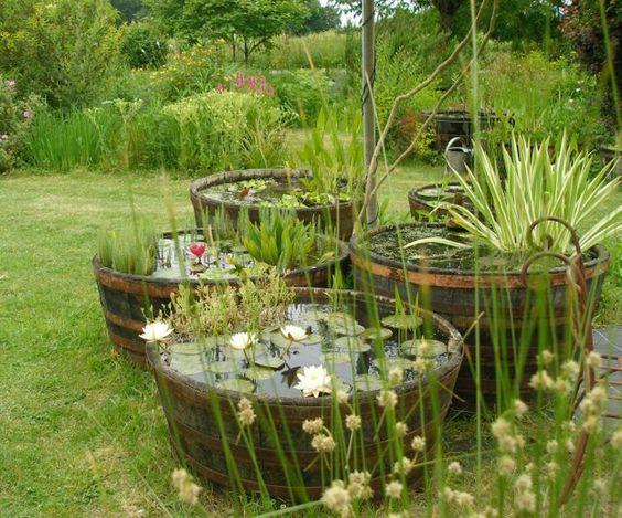 Mini bassin le petit jardinier - Plantes aquatiques pour bassin de jardin ...