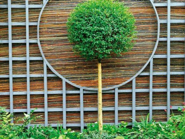 canisse-jardin-bambou-feng-shui-arbre-bonsaï-déco