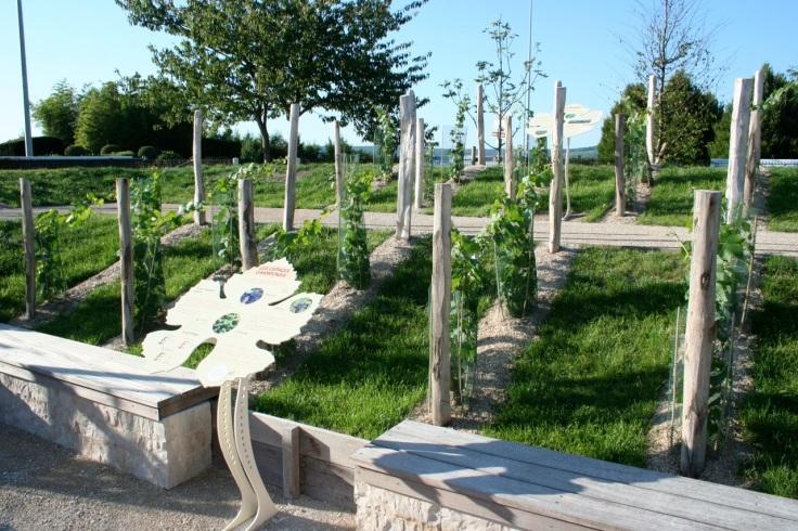 jardin-de-vignes-5
