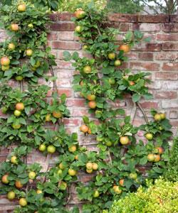 mur-fruit
