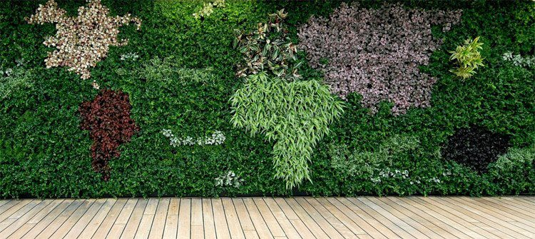 mur-vegetal-terrasse
