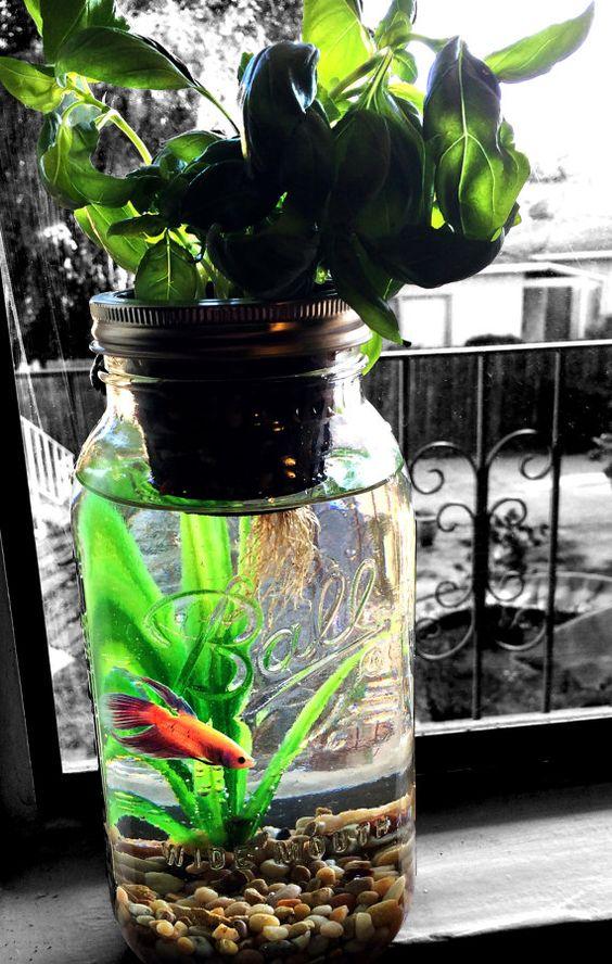 L Aquaponie Le Petit Jardinier