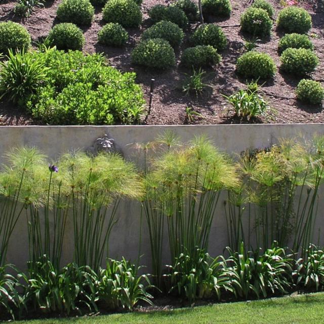 mur-de-clôture-béton-plantes