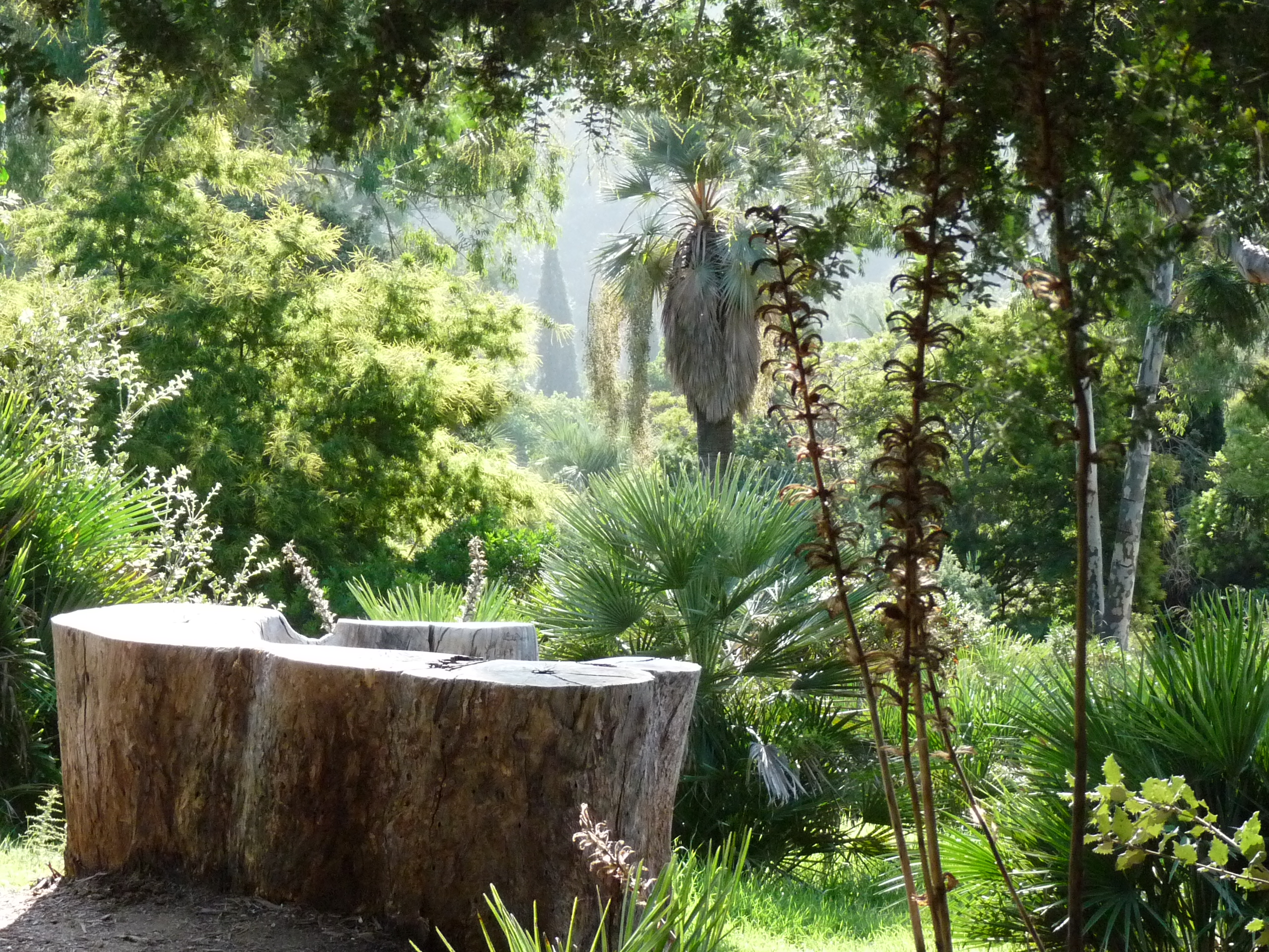Jardin_d'Australie,_tronc_d'eucalyptus_-_Domaine_du_Rayol