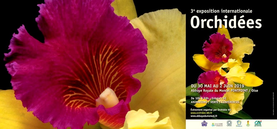 expo-international-orchidees-abbaye-du-moncel-orchidee60